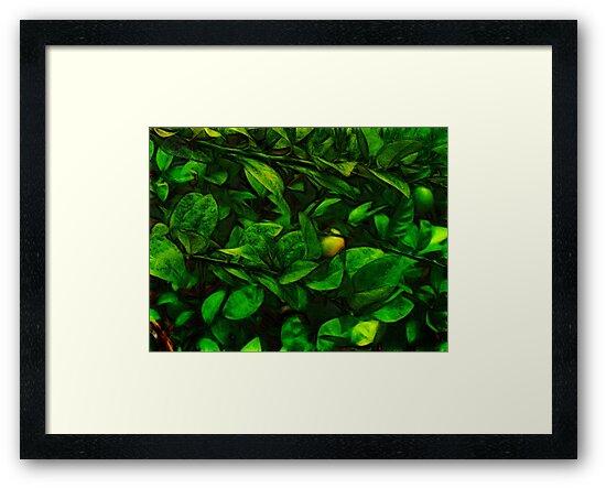 ©GS The Lemon Tree I Paintography by OmarHernandez