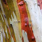 Snowgum Bark by Brett Thompson