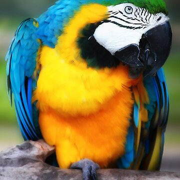 Blue and Gold Macaw by GreenEyedHarpy