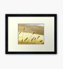 Prairie Grass Framed Print