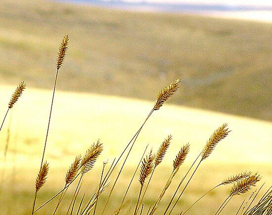 Prairie Grass by George Cousins