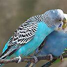 Love Birds by Glenna Walker