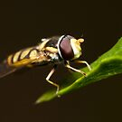 Hoverfly Eyes by Andrew Durick