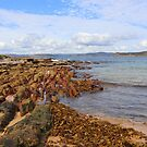 Putty Beach Central Coast NSW by Doug Cliff