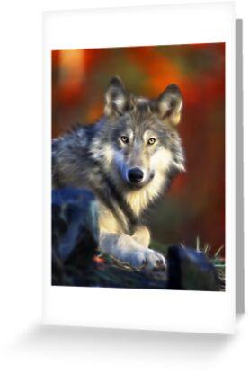 Lonely Wolf by Beverlytazangel