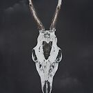 Roe Deer Skull with Death Hawk Moth by Sybille Sterk