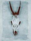Floating roe deer skull by Sybille Sterk