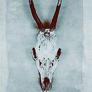 Floating roe deer skull by Sybille Sterk