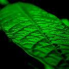 Fluorescent Green by MMerritt