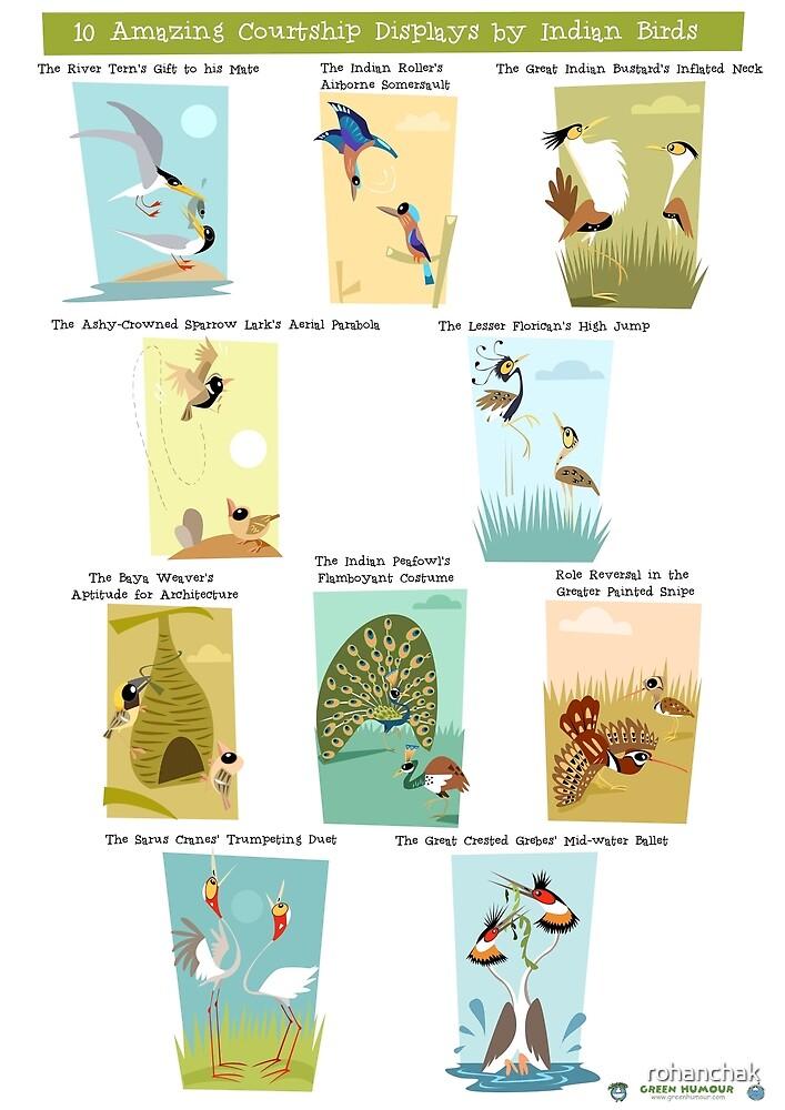 Illustrated Courtship Displays of Ten Indian Birds by rohanchak