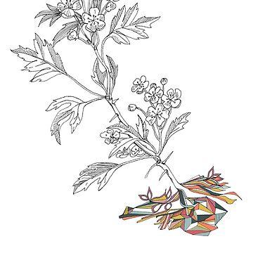 Botanical 1 by thethinks