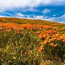 Lancaster Poppy Fields, Welcome Spring by photosbyflood