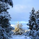 sunny snowy hallway by boondockMabel