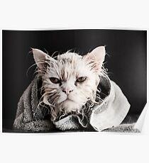 Wet Kitty Poster
