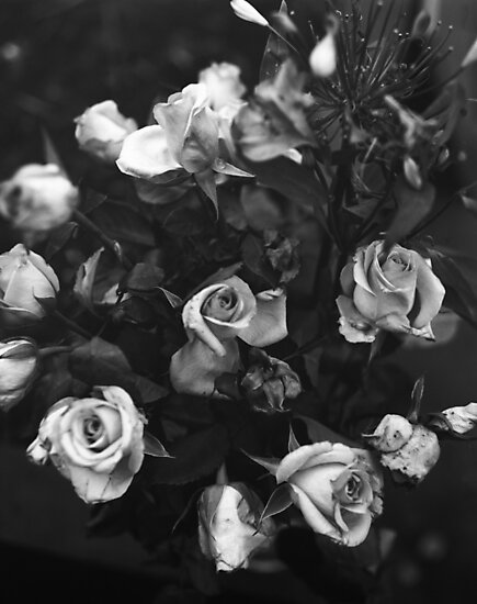 Roses For you by rorycobbe