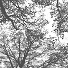 «Grey Tree Silhouettes» de by-jwp