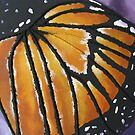 Monarch Butterfly by cathy savels