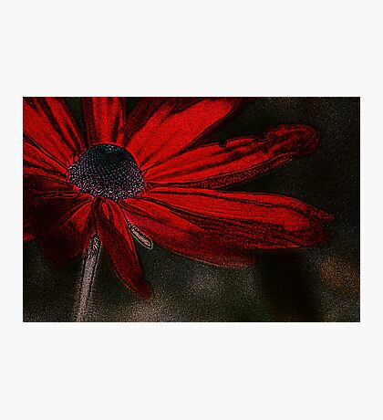 Red, for you... Photographic Print