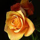 GOLDEN SUN GLOW ~ ROSE by Elaine Bawden