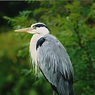 Heron by Martina Fagan