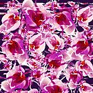Orchid Chaos by creativevibe