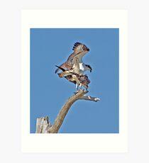 Double Decker Ospreys Art Print