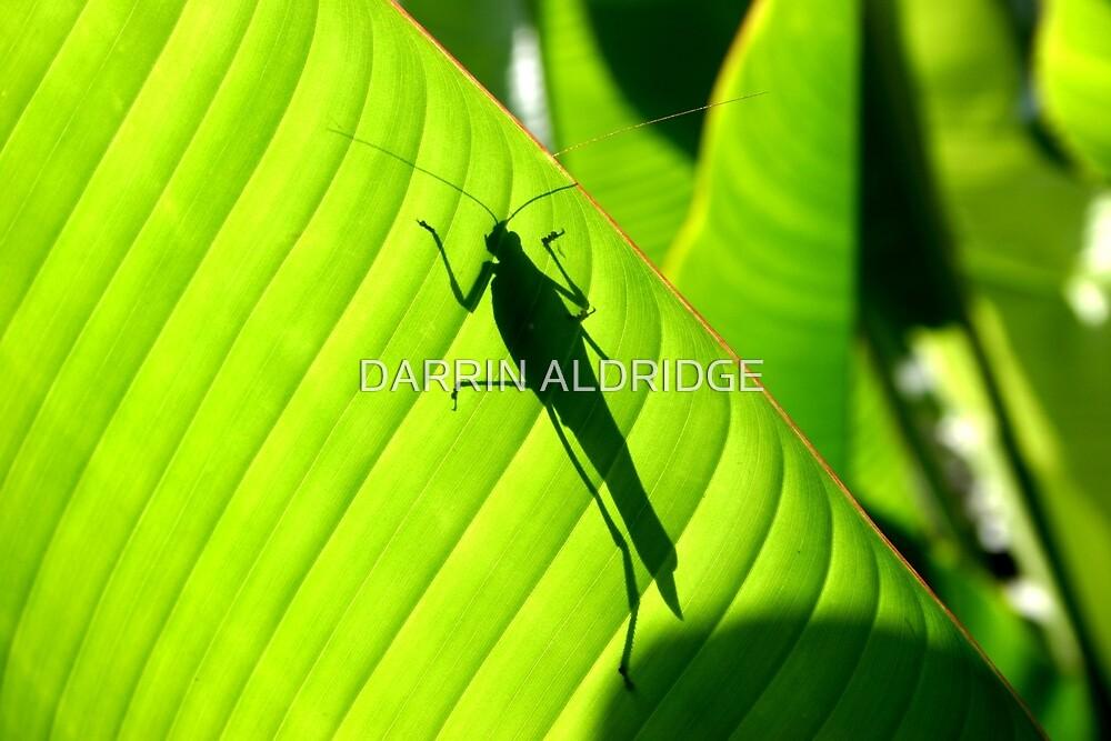 Katydid Silhouette by DARRIN ALDRIDGE
