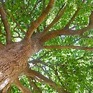 Under the Oak by Sharon Brown