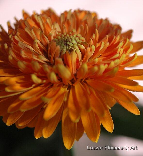 Autumn Blooming by Lozzar Flowers & Art