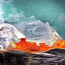 Iceberg reflecting Sunset by Kathie Nichols