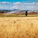 Australian Meadow with Fires Burning, Tasmania. by Columodwyer