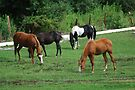 Grazing Horses by Tori Snow