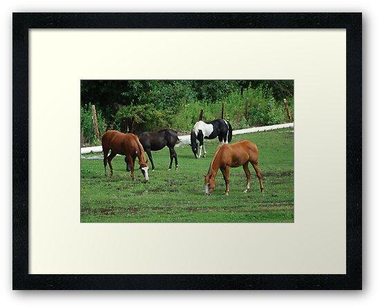 Grazing Horses by Tori Snow