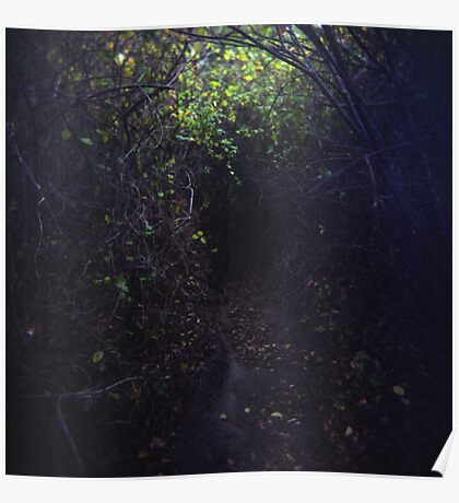 The Dark Thicket of Life Poster