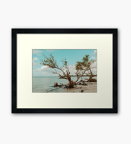 Beauty and Tranquility Framed Print