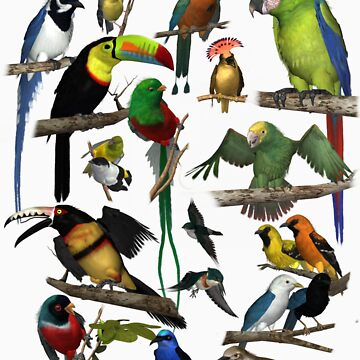 Birds of the Yucatan by empken