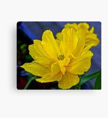 Yellow Tulip..... Canvas Print
