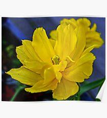 Yellow Tulip..... Poster