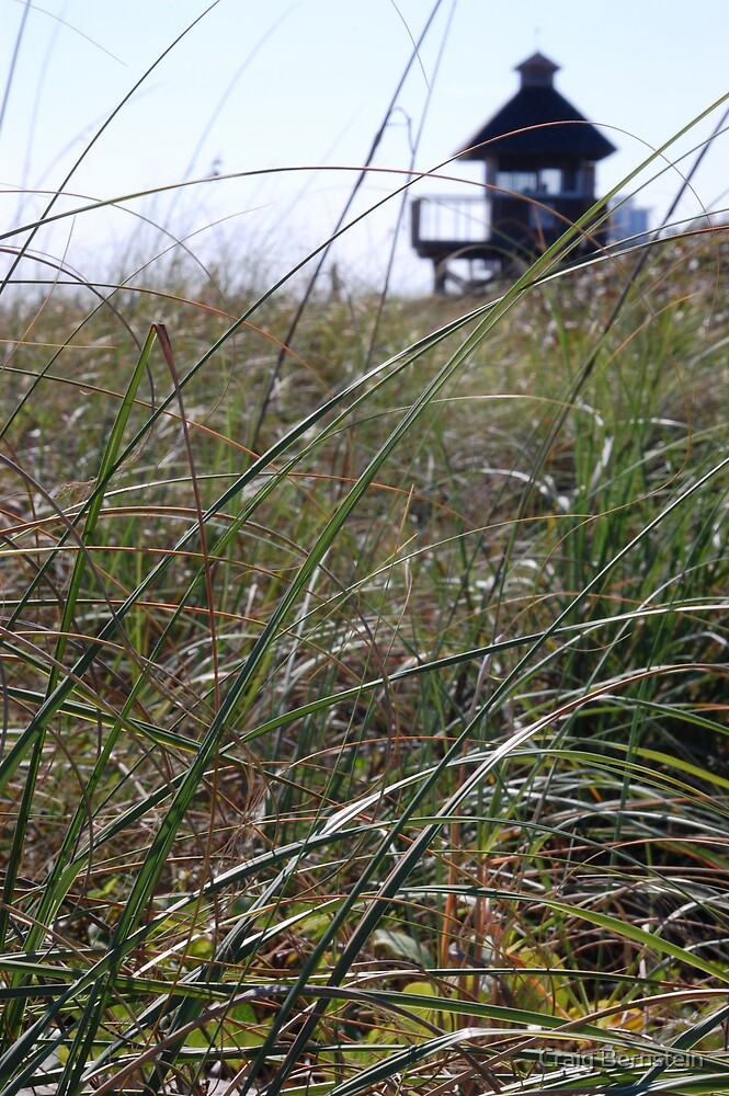 Beach Grass by Craig Bernstein