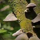 Shrooms by Dave Cauchi