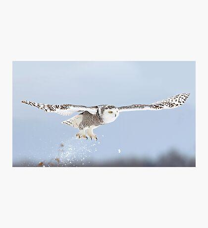 Snowy owl blast-off Photographic Print