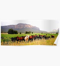 Having Fun Wish You Were - Capertee Valley  Poster