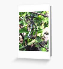 Dragonflies mating Greeting Card
