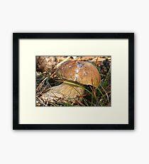 mushrooms (Boletus edulis) Framed Print