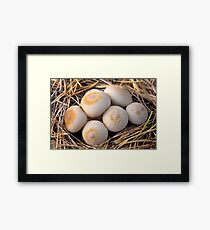 group of mushrooms (Lycoperdon umbrinum). Framed Print