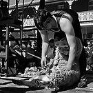 Shearing by GailD