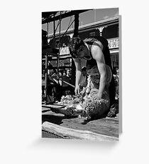 Shearing Greeting Card