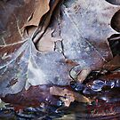 Leaves, Water, and Ice by wildozark