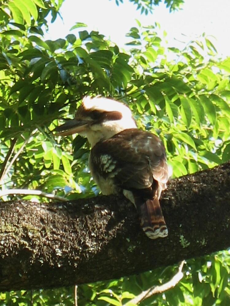 Kookaburra by Jenelle  Irvine