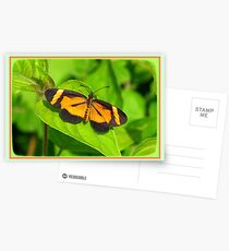 Heloconius Butterfly Postcards